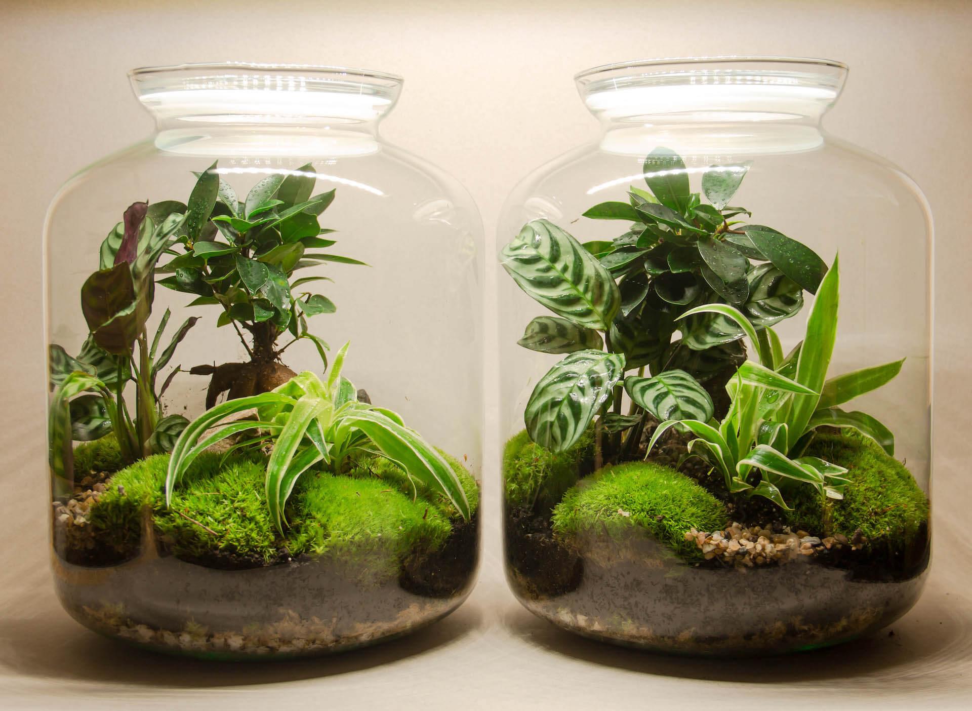 Zelina world rastlinný svet veľkosť XL