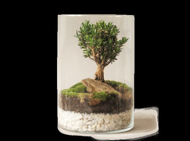 Zelina world Rastlinný svet