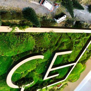Zelina world rastlinná stena pre firmy